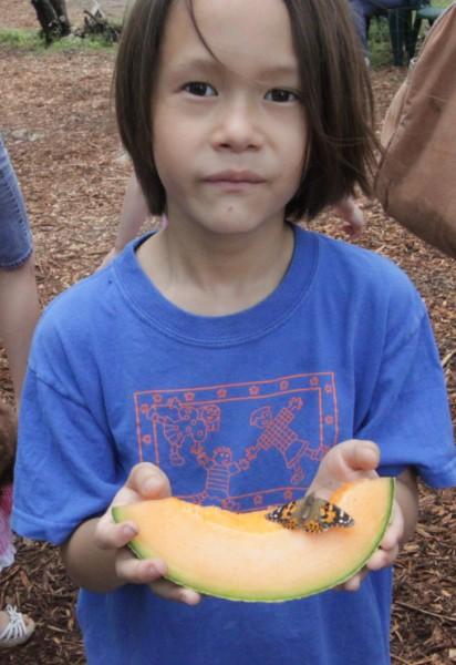 wimberley butterfly release
