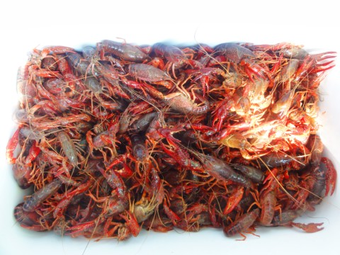 28 lbs of live crawfish westlake austin west lake hills