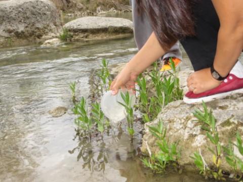 catch and release guppy rio frio blanco river