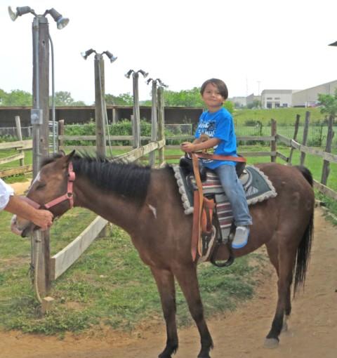 pony ride kiddie acres 2013
