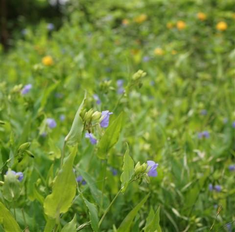 wildflowers austin westlake