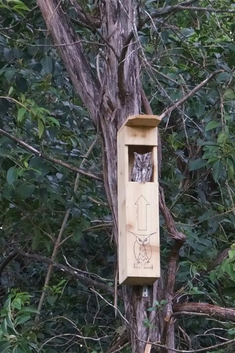owl reach owl box austin westlake texas