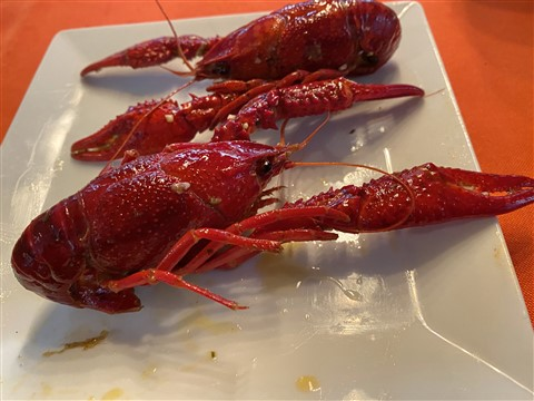 asian crawfish