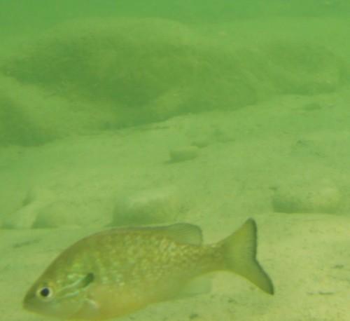 rio frio fish pic