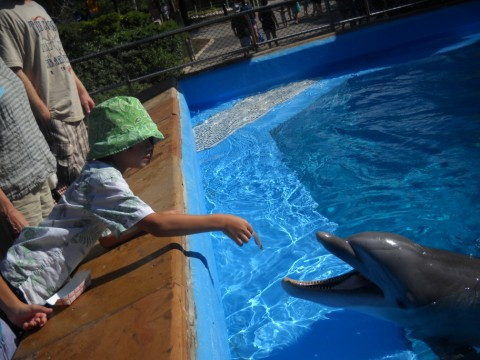 feeding the dolphins seaworld san antonio