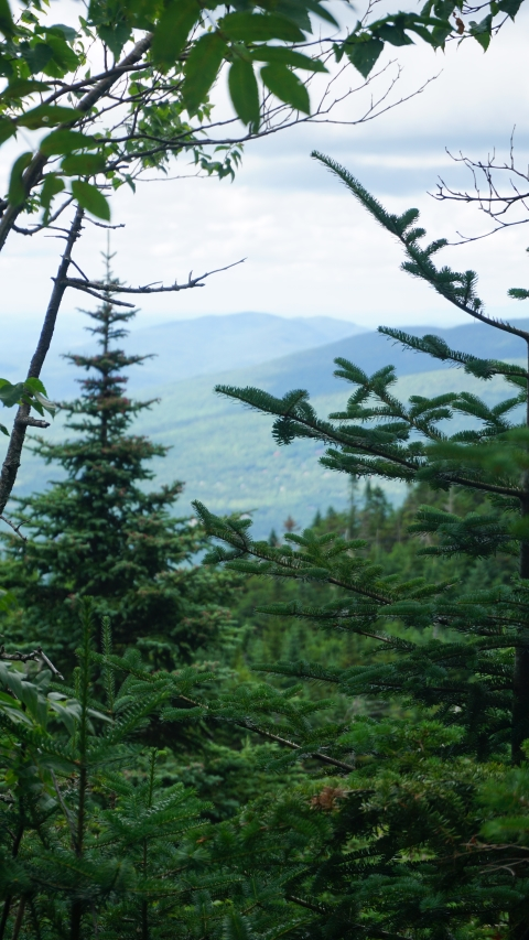 sterling pond trail view, stowe vt