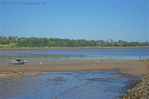 bay of fundy low tide clam digger nova scotia