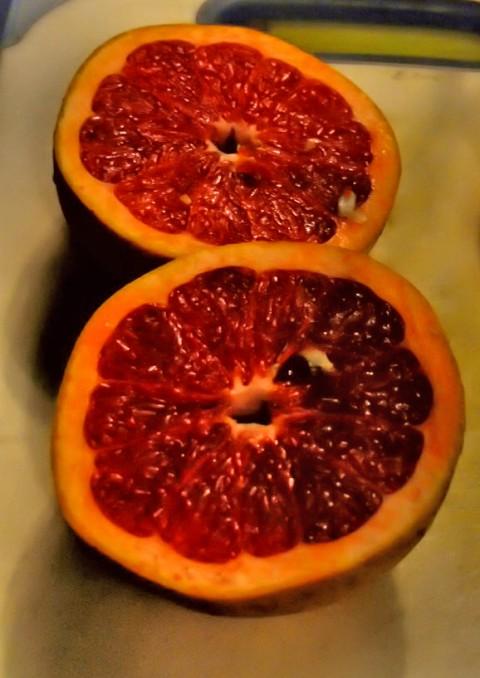 texas ruby red rio star grapefruit
