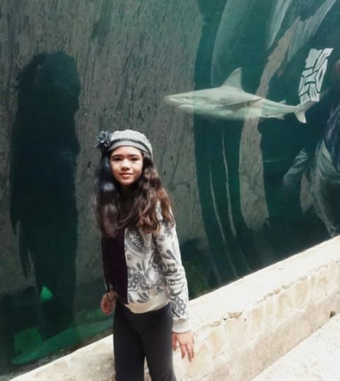 shark walk tube dallas world aquarium