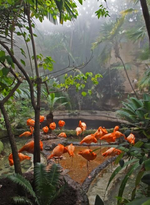 beautiful flamingos dallas world aquarium