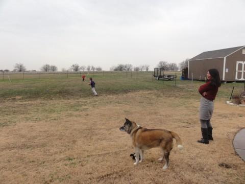 godley texas back yard