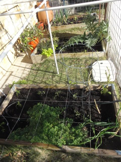 austin planter box garden