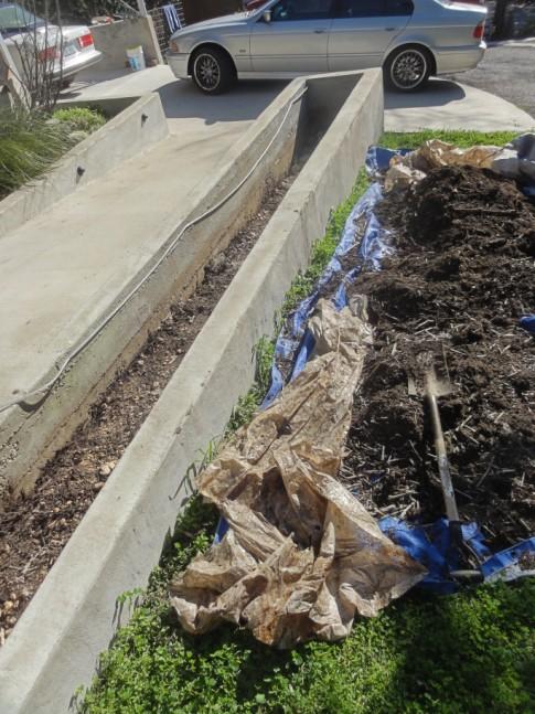 austin equisetum planter preperation