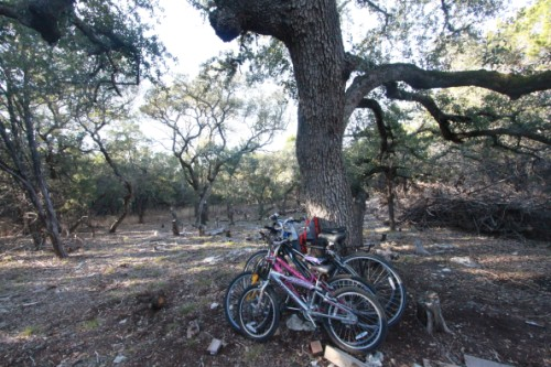 oak tree bike rack wimberley