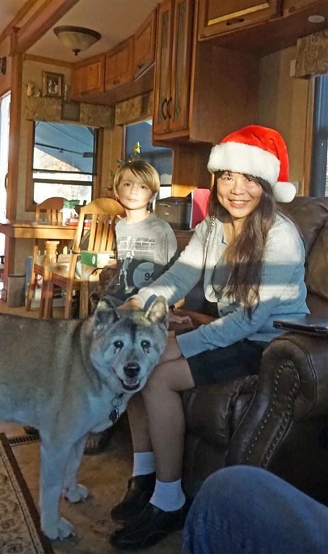 christmas akita