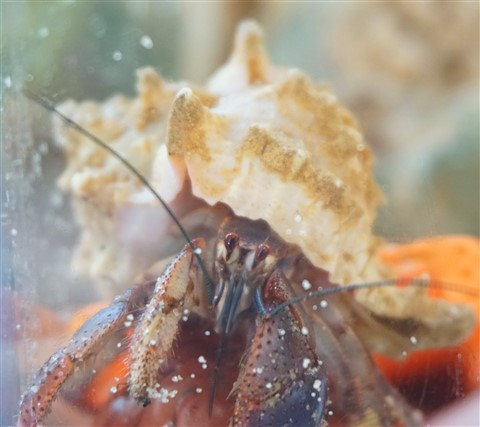 hermit crab portraiture by paul schuster