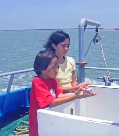 sea safari and dolphin watch SPI