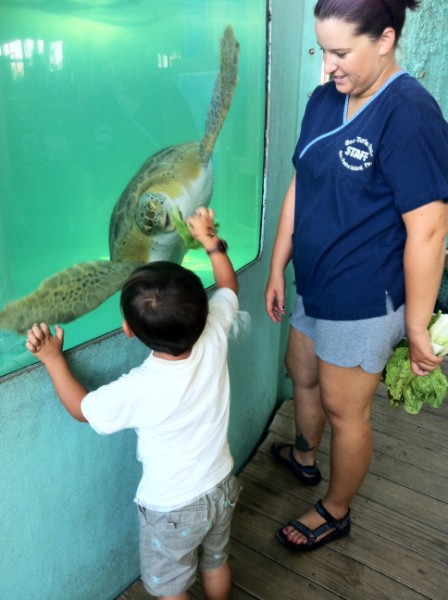 south padres island sea turtle rescue