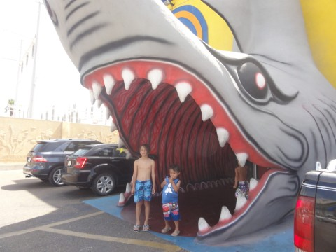 tourist trap crap store south padre island shark spi tx texas
