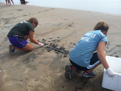 sea turtle release spi padre island texas
