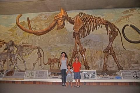 elephant hall morrill hall mammoth bones skeleton