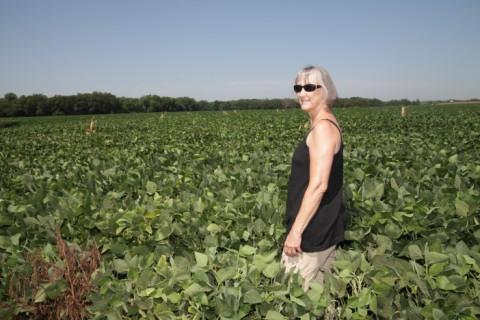 nebraska soy bean crop portrait