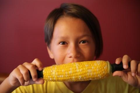 fresh nebraska corn on the cob