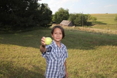 farm grown apple fresh off the tree in nebraska