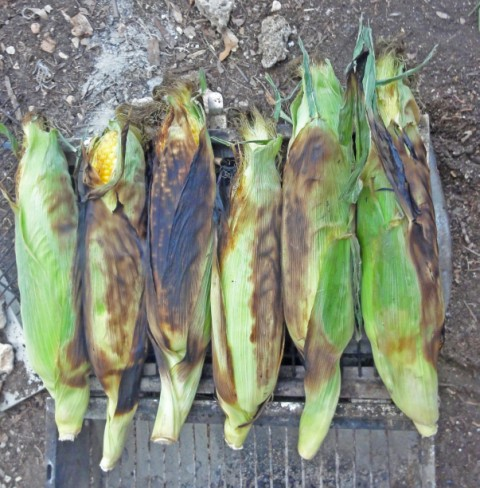 roasting ears of corn on the grill