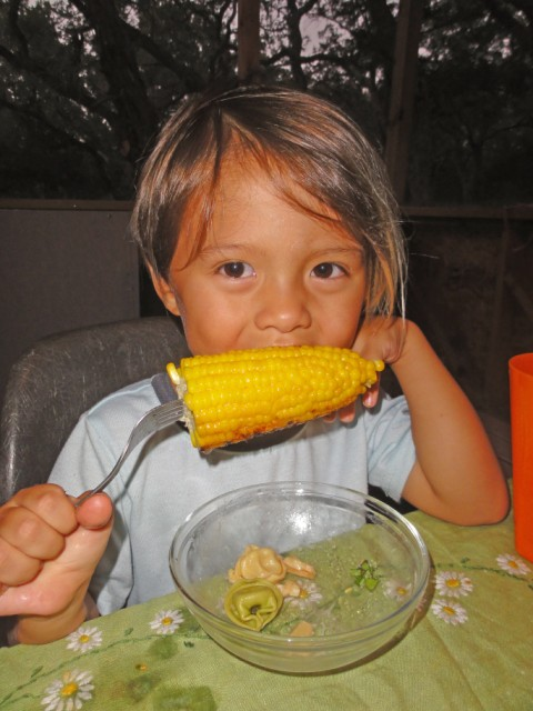 boy eats corn on the cob with his holder