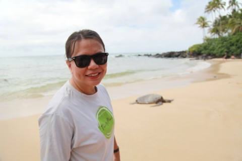 north shore hawaii sea turtle