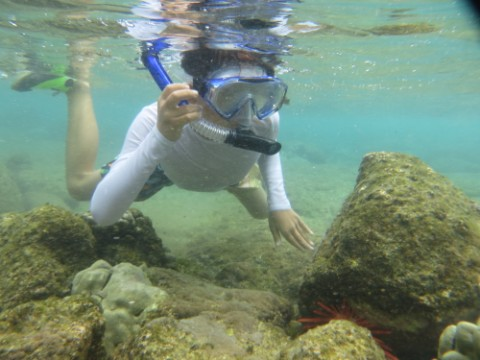 snorkel kona hawaii