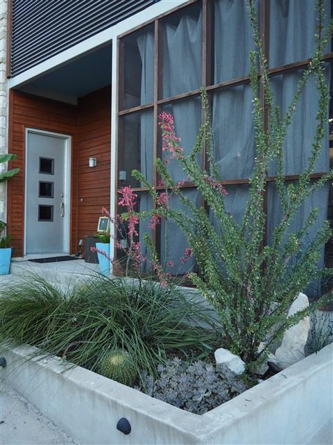 austin succulent xeriscape cactus carden