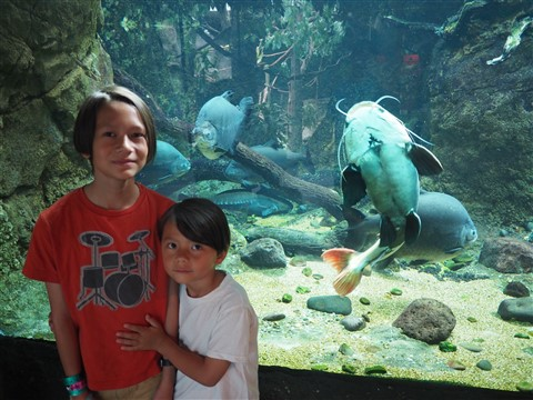houston zoo aquarium