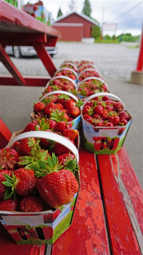 fraises strawberries from ile d'orleans quebec island orleans