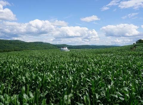 danville vt boat cornfield great vermont corn maze 2018