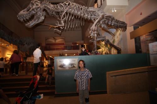 washington DC smithsonian museum of natural history