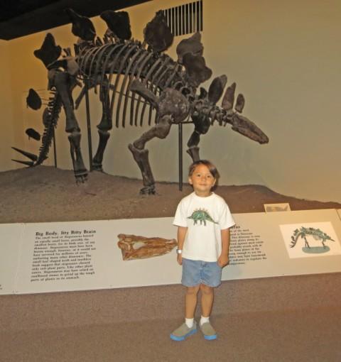 stegosaurus nebraska