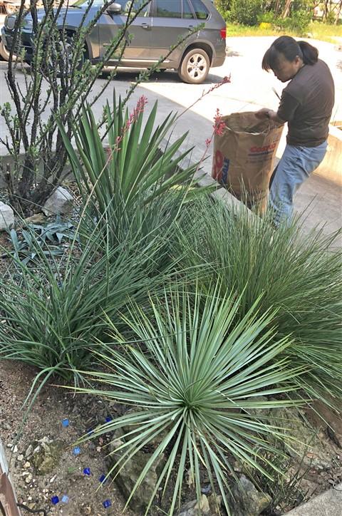 cactus garden 78746