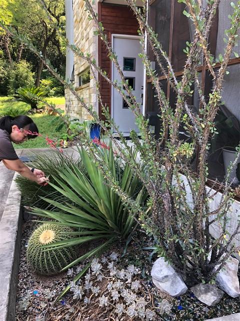 cactus garden westlake austin