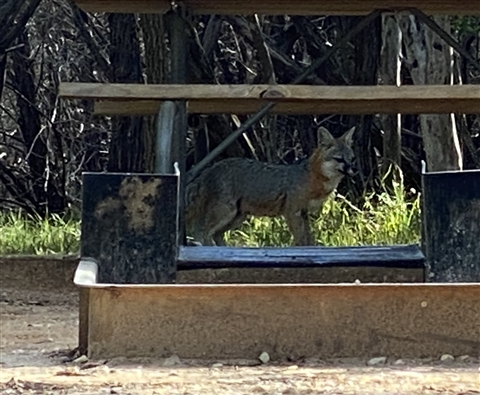fox at pedernales falls state park rv site #9