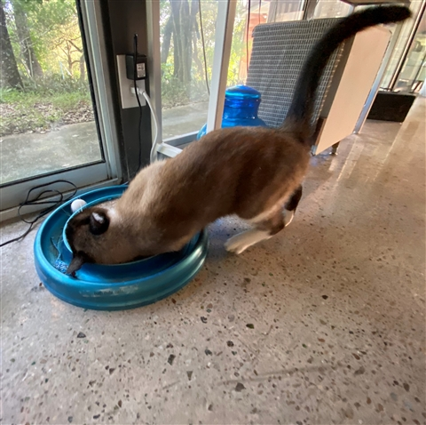 catnip cat weed