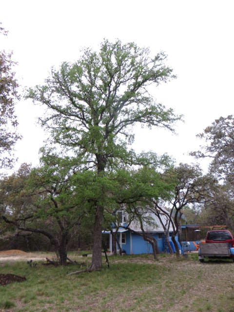 wimberley big tree cabin