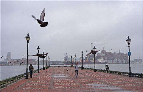 fells point pidgeon baltimore