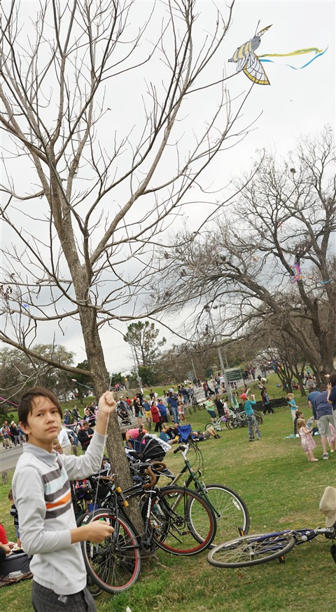 zilker kite festival tree failure 2016