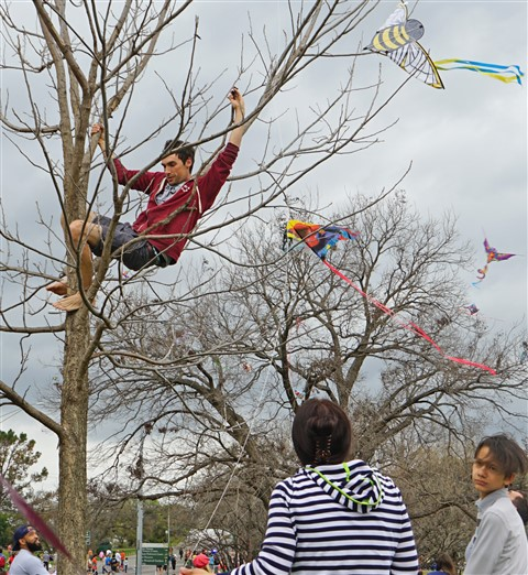 tree climbing stranger rescues kite at zilker kite festival 2016