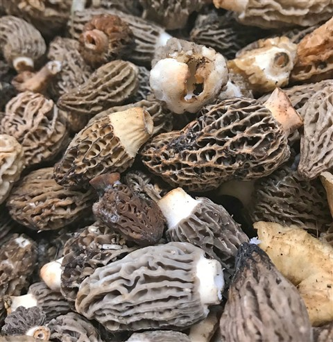 fresh morel mushrooms austin