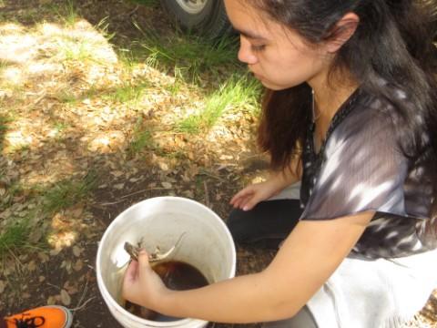 lizard in a bucket wimberley
