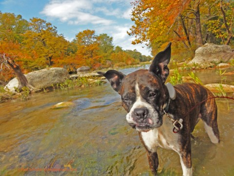 eichler the boxer blanco river wimberley fall