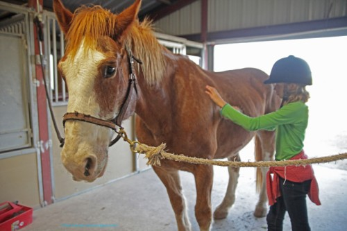 horse grooming lesson at be canto farms wimberley